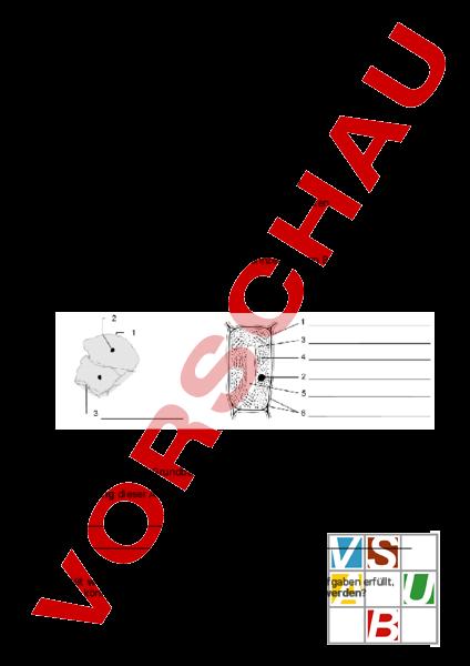 www.unterrichtsmaterial.ch - Biologie - Genetik - Test Zelle und ...