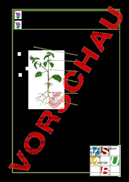 arbeitsblatt teile der pflanze biologie pflanzen botanik. Black Bedroom Furniture Sets. Home Design Ideas