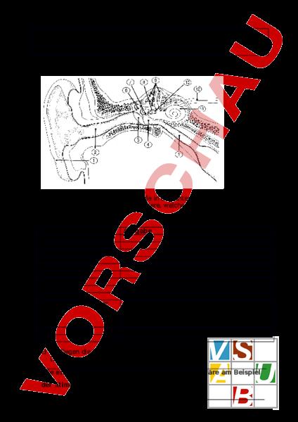 Arbeitsblatt Prufung Ohr Gehor Biologie Anatomie