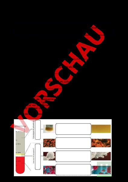 Arbeitsblatt: Prüfung Blut und Blutkreislauf - Biologie - Anatomie ...