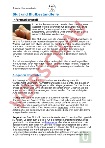 Arbeitsblatt: Blut und Blutbestandteile - Biologie - Anatomie ...
