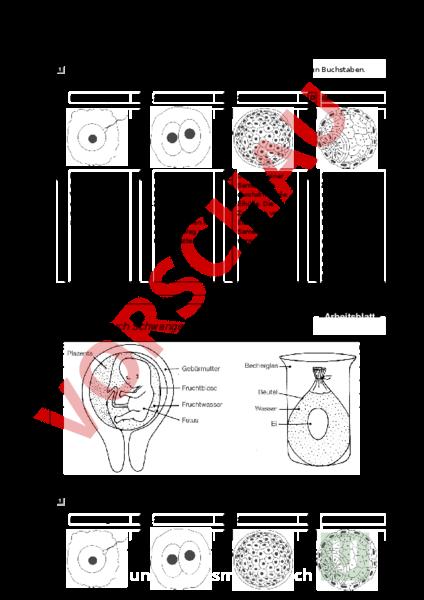 www.unterrichtsmaterial.ch - Biologie - Genetik - Beginn der ...