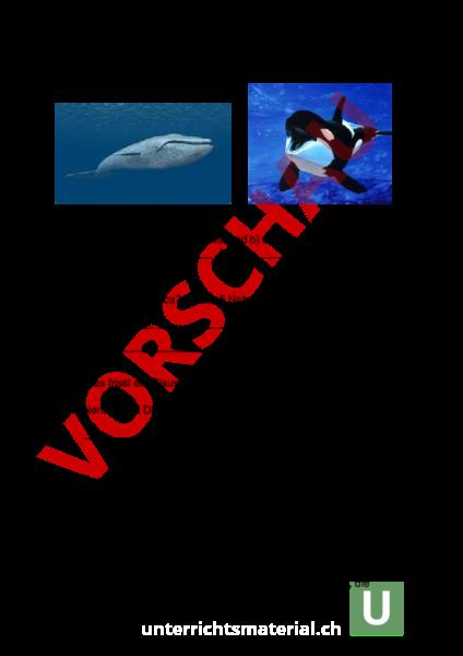 Arbeitsblatt: Fragen Orca und Blauwal - Biologie - Tiere