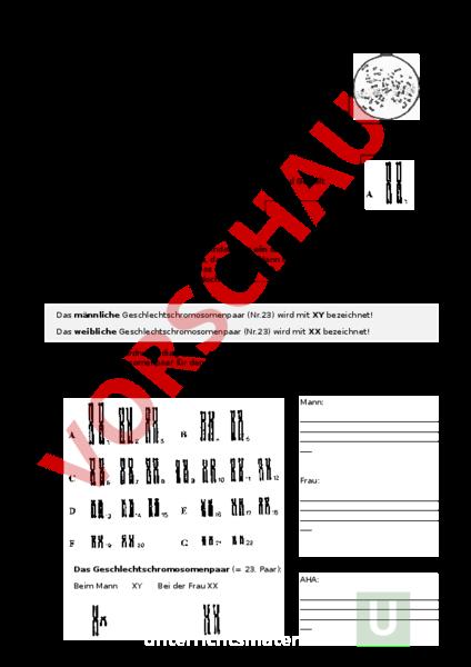Arbeitsblatt: Genetik - Chromosomen - Biologie - Genetik
