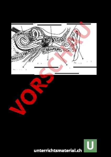 Arbeitsblatt Ohr Auge Biologie Anatomie Physiologie