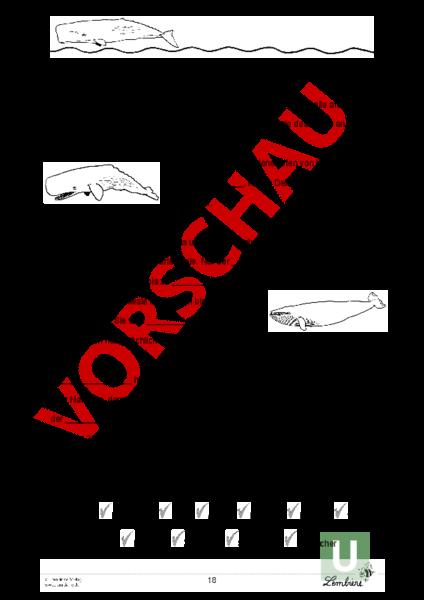 Arbeitsblatt: Wal Werkstatt - Biologie - Tiere