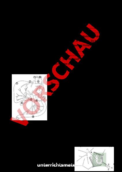 www.unterrichtsmaterial.ch - Biologie - Anatomie / Physiologie - Die ...