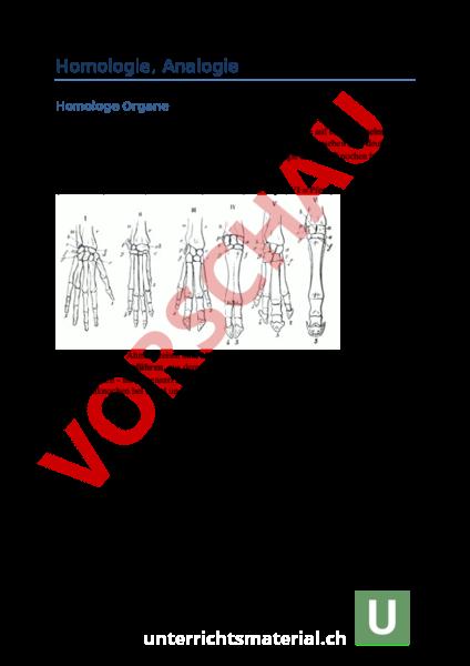www.unterrichtsmaterial.ch - Biologie - Evolution - Theorieinput ...