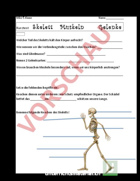 Arbeitsblatt: Anatomie Körper - Biologie - Anatomie / Physiologie