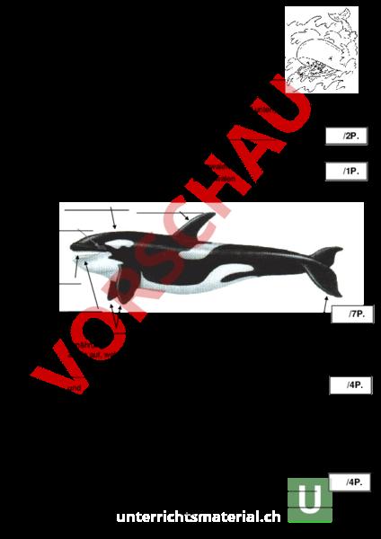 www.unterrichtsmaterial.ch - Biologie - Tiere - Test Wale und ...