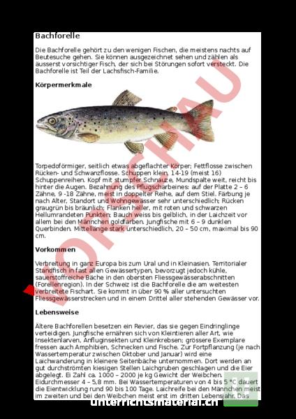 Tolle Körper Tier Arbeitsblatt Zeitgenössisch - Arbeitsblätter für ...