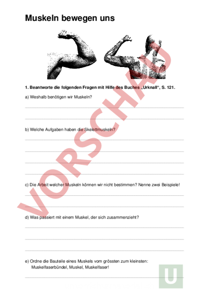 Arbeitsblatt: Muskeln (Prinzip Gegenspieler) - Biologie - Anatomie ...