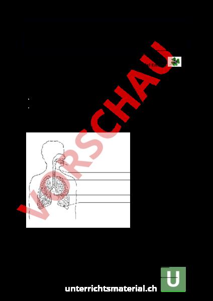 Nett Anatomie Und Physiologie Tests Fotos - Anatomie Von ...