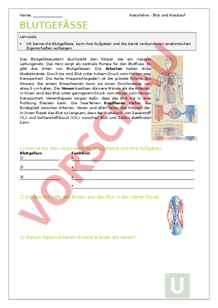 Arbeitsblatt: Blutgefaesse - Biologie - Anatomie / Physiologie