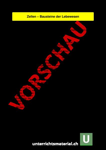 Gemütlich Genetik Vokabular Arbeitsblatt Antworten Zeitgenössisch ...