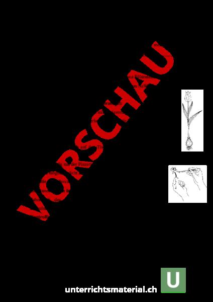 www.unterrichtsmaterial.ch - Biologie - Pflanzen / Botanik ...