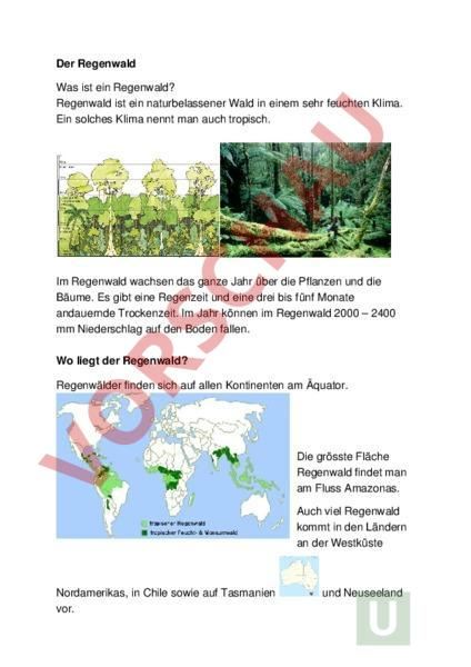 Arbeitsblatt: Diktat Regenwald - Deutsch - Rechtschreibung