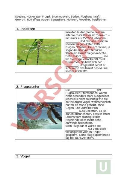 Arbeitsblatt: 5 Eroberer der Luft - Biologie - Gemischte Themen