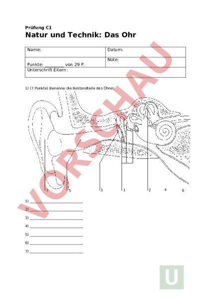 Arbeitsblatt Das Ohr Biologie Anatomie Physiologie