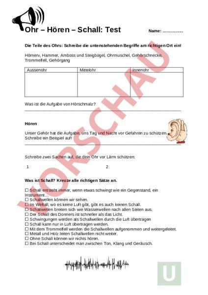 Arbeitsblatt Test Ohr Biologie Anatomie Physiologie